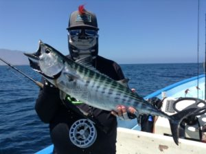 cedros outdoor adventures, panga fishing, Mexico, calico bass, yellowtail, grouper, packages, fly fishing, ocean