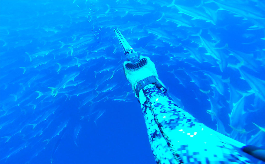 CEDROS-Angler-iimage-spearfishing-yellowtailSM-1024x635.jpg